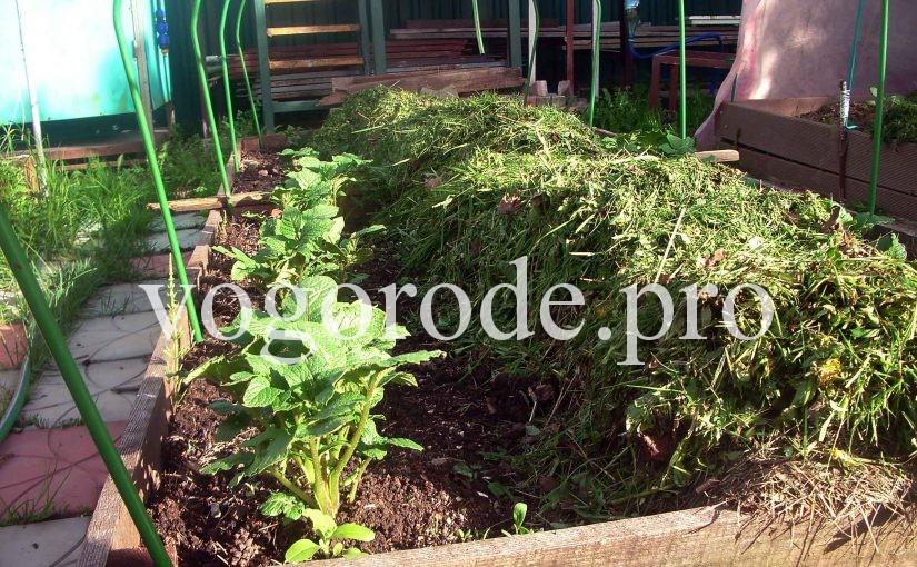 Активная мульча, интенсивные грядки, мульчирование свежей травой