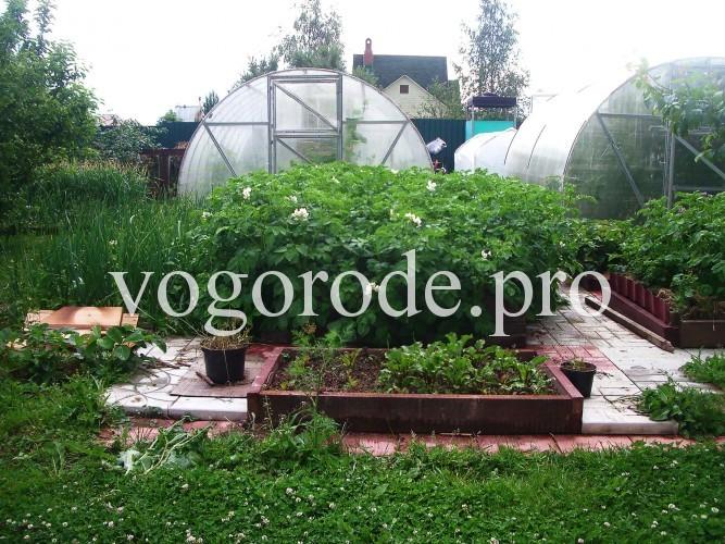 Выращивание картофеля в грядках коробах