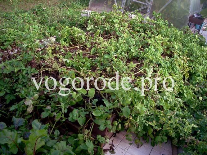 Выращивание картофеля в грядках-коробах.