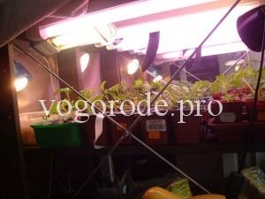 подсвечивание-рассады-помидоров