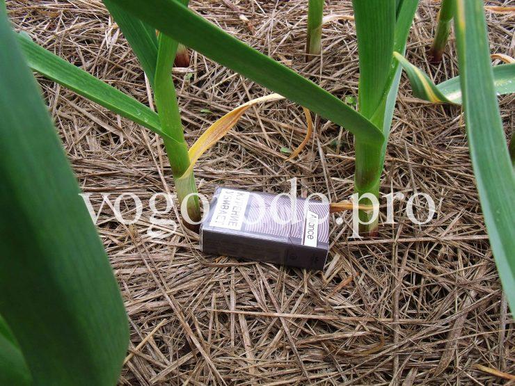 Посадка озимого чеснока. Мульчирование сеном и листьями.