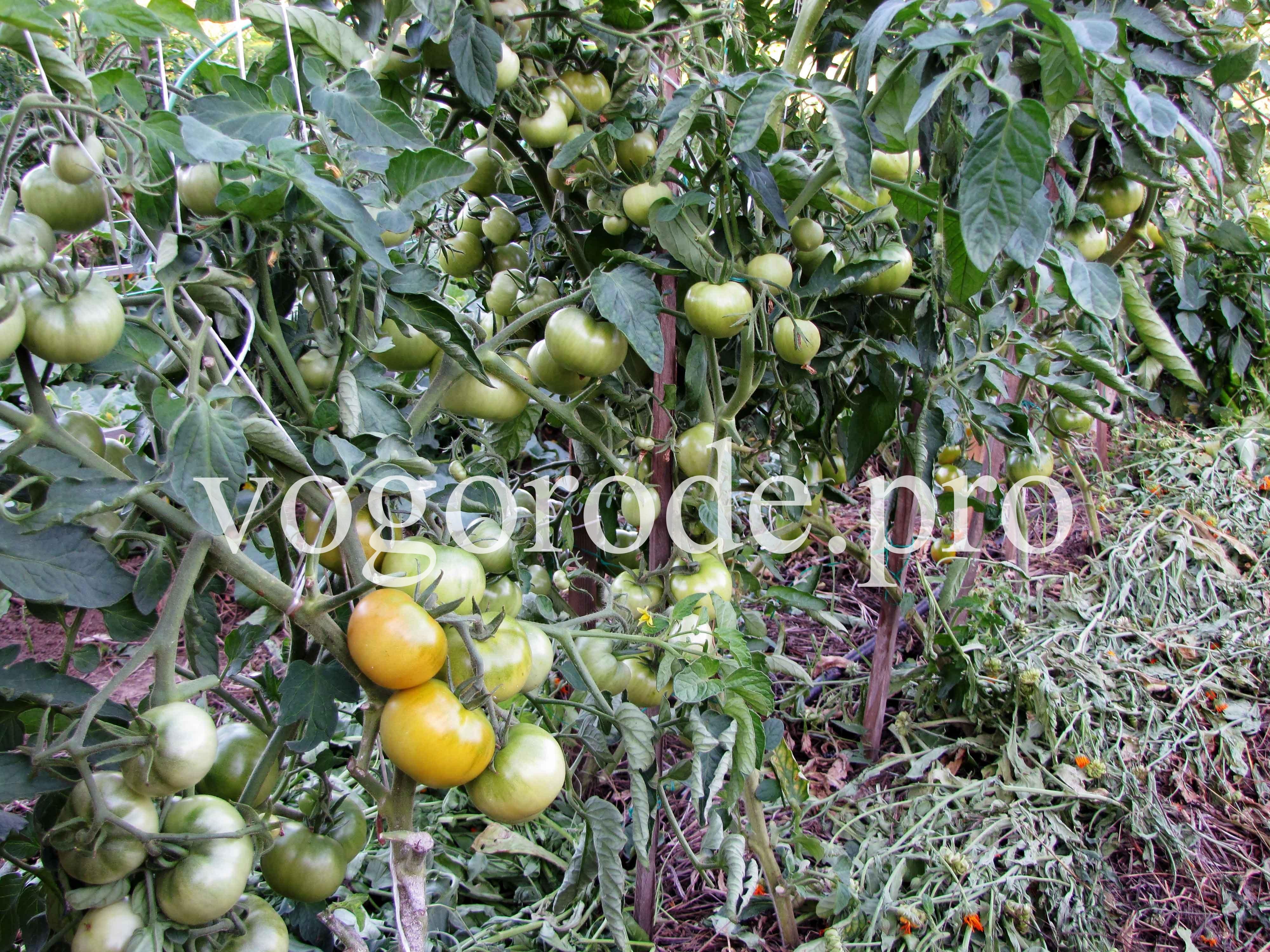 Мульчирование-томатов