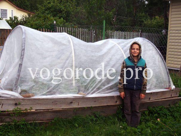 Что выращивать в ленинградской области на огороде?