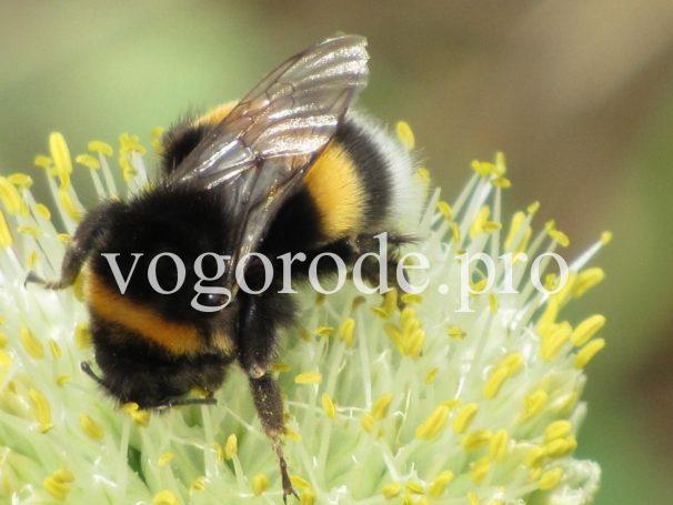 Опыление. Размножение растений. Самоопыление. Тычинка, пыльник, пестик, рыльце
