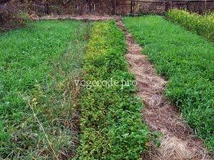 Природное земледелие на садовом участке. Практика.