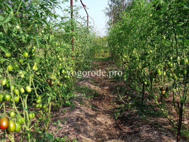 Природное земледелие видео
