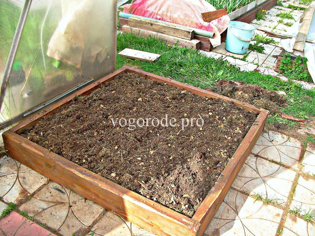 Посадка картофеля ростками.