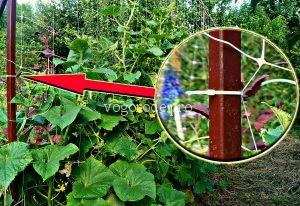 Шпалера для огурцов своими руками. Сетка для выращивания огурцов.