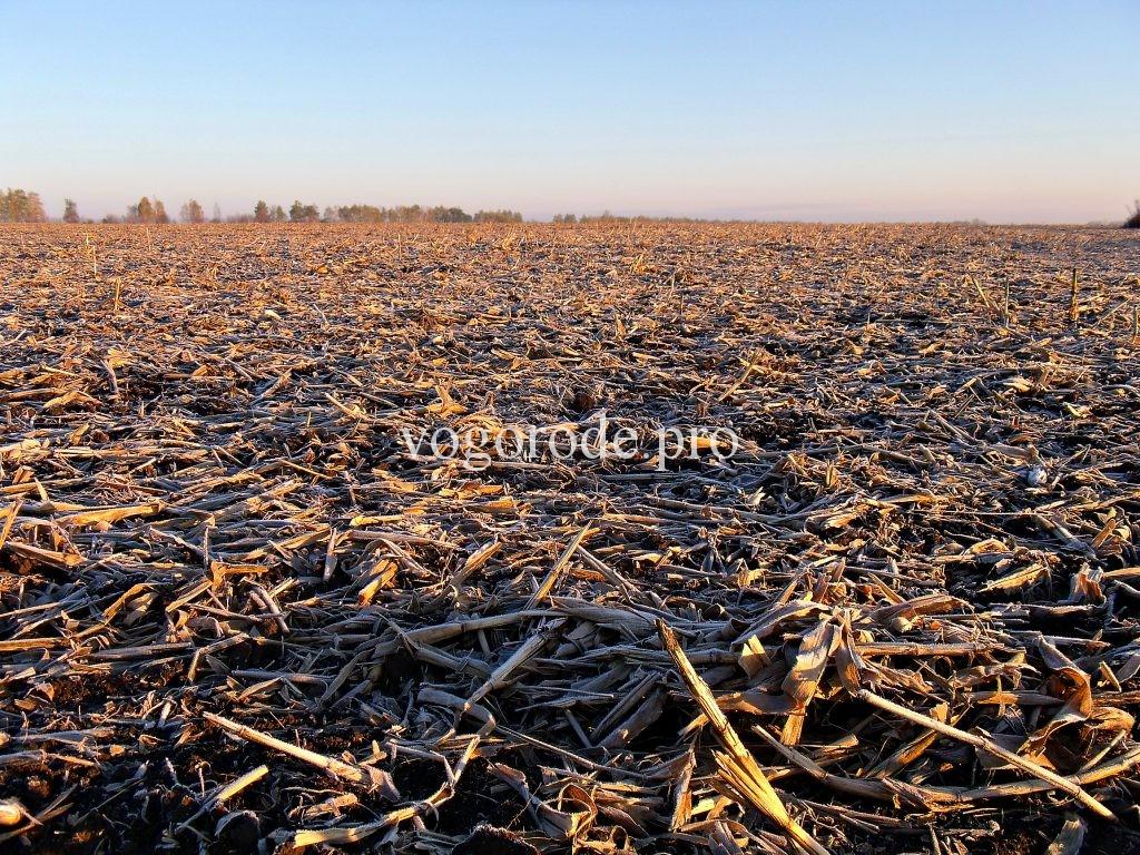 Природное земледелие на больших площадях.