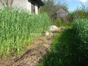 Сидераты в природном земледелии
