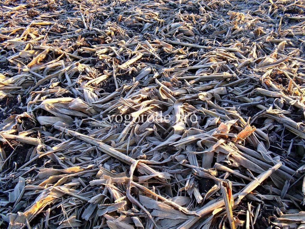 Минимальная обработка почвы на больших полях.