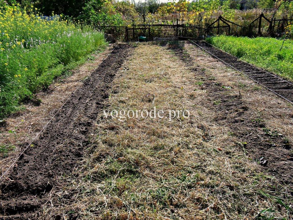 Минимальная обработка почвы и сидераты на маленьких грядках.