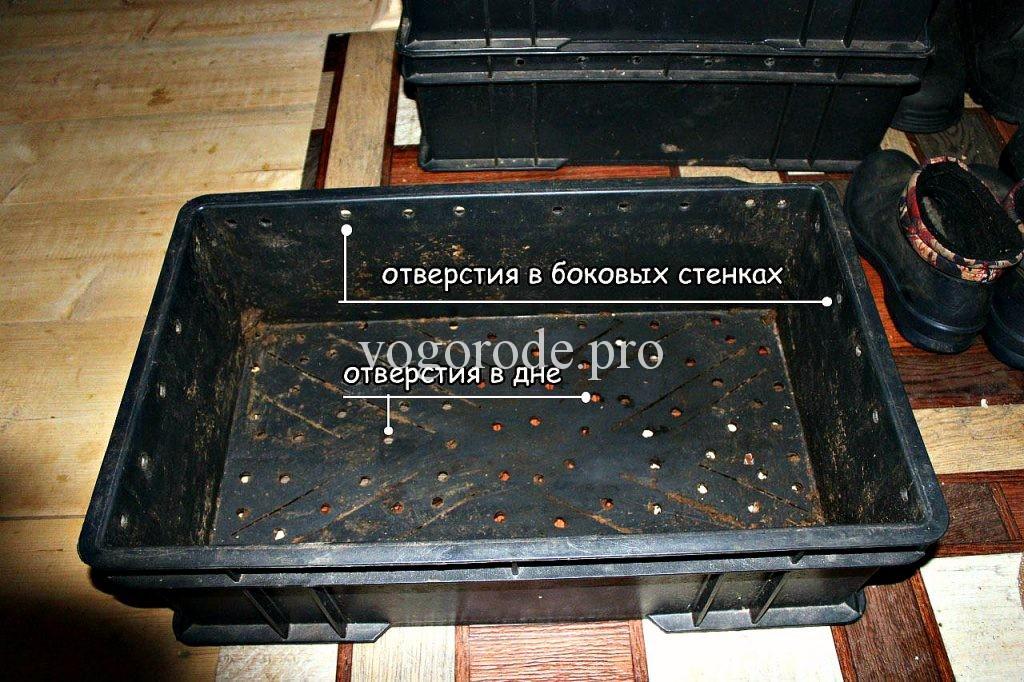 Разведение червей «Старатель» в ящиках.
