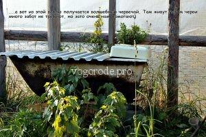 Разведение червя «Старатель» на даче для получения вермичая.