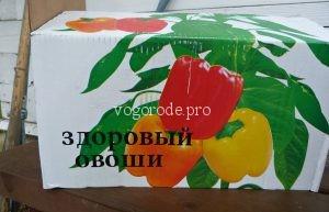 Полезны ли магазинные яблоки? Чем обрабатывают яблоки