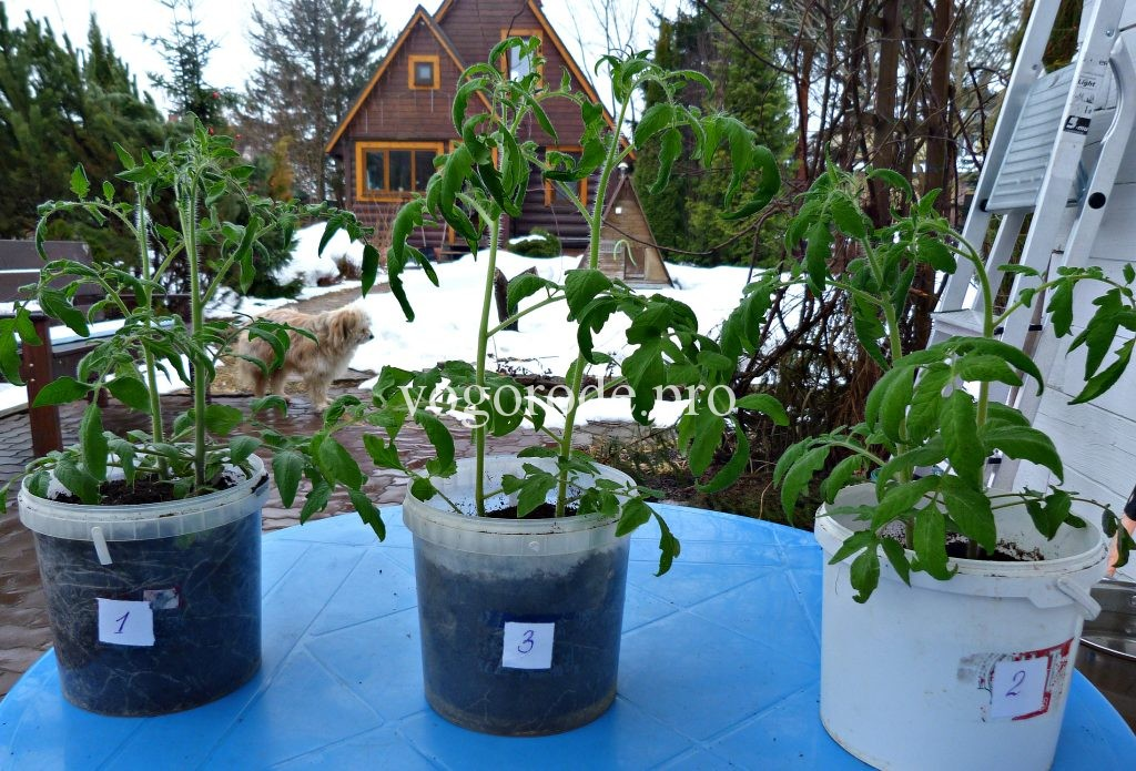 Лампы для выращивания рассады. Какие фитолампы для рассады лучше