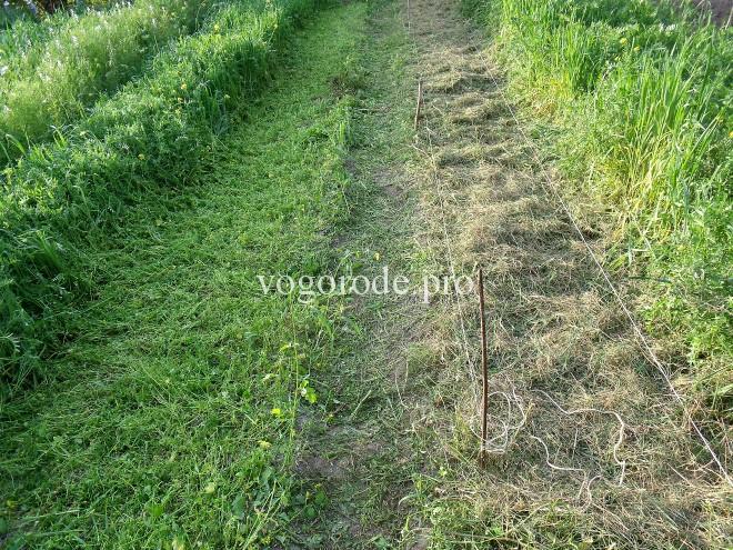 Природное земледелие. Для чего сеять сидераты?