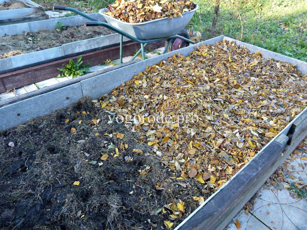 Мульчирование чеснока осенью
